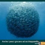 Animali_Testa_di_Pazzo (1)