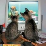 Animali_Testa_di_Pazzo (10)