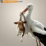 Animali_Testa_di_Pazzo (12)