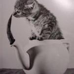 Animali_Testa_di_Pazzo (13)