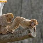 Animali_Testa_di_Pazzo (18)