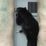 Animali_Testa_di_Pazzo (2)