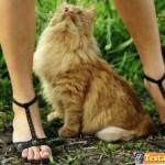 Animali_Testa_di_Pazzo (24)