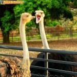 Animali_Testa_di_Pazzo (28)