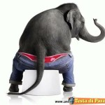 Animali_Testa_di_Pazzo (30)