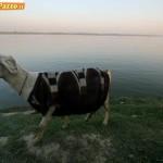 Animali_Testa_di_Pazzo (33)