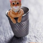 Animali_Testa_di_Pazzo (35)