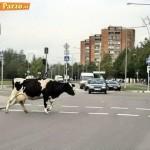 Animali_Testa_di_Pazzo (36)