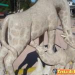 Animali_Testa_di_Pazzo (38)