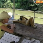 Animali_Testa_di_Pazzo (42)