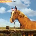 Animali_Testa_di_Pazzo (45)