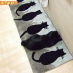 Animali_Testa_di_Pazzo (48)