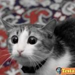 Animali_Testa_di_Pazzo (5)