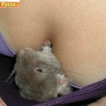 Animali_Testa_di_Pazzo (50)