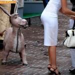 Animali_Testa_di_Pazzo (54)