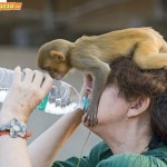 Animali_Testa_di_Pazzo (58)