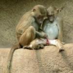 Animali_Testa_di_Pazzo (9)