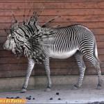 Animali_strani_Testa_di_Pazzo (6)