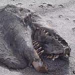 Mistero in Nuova Zelanda, ritrovato mostro marino dai denti aguzzi