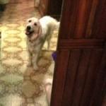 Livorno, cane salva intero condominio da esplosione!