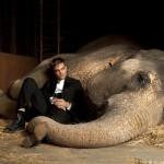 Un uomo ama follemente un'elefantessa