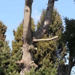 Due carabinieri al parco vedono un albero di pere e si chiedono se è maschio o femmina…