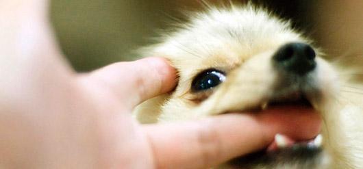 Tra due amici: Oggi ho portato il cane dal veterinario perche' ha il vizio di mordere mia moglie.