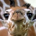 Un piccolo coniglio corre nella giungla quando vede una giraffa intenta a rollarsi una canna.