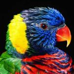 Un giorno una donna decide di acquistare un pappagallo alle sue figlie.