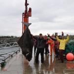 Oltre 230kg di sogliola: è la più grande del mondo