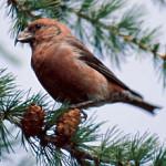 Un uccellino sta girando per il bosco e a un certo punto trova un cane
