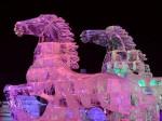 Image5_ cavalli-ghiaccio