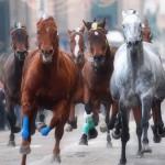 Del Piero e Totti al cinema stanno guardando una scena di corse di cavalli.