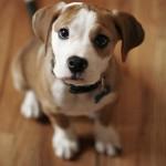 Il tuo cane sente le emozioni come te