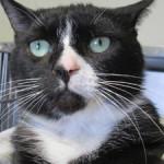 """Gatto puzzolente restituito alla protezione animali: """"fa troppe scoregge"""""""