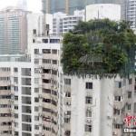Uomo d'affari cinese cerca di nascondere attico abusivo con piante e alberi