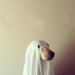 Halloween-pets-016