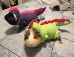 Halloween-pets-028