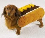 cane-hotdog