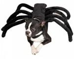 cane-ragno-perfetto-per-halloween