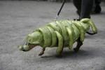 dog-parade-4-600