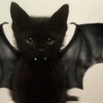 Alcune idee per travestire i vostri animali per Halloween