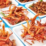 Tutti pronti a gustarsi i piatti con gli insetti in un locale milanese: ma l'Asl sequestra tutto