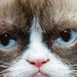 """""""Grumpy cat"""" il gatto più famoso del web è anche il più ricco. Padrona lascia lavoro e vive di rendita"""