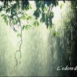 Perchè sentiamo un profumo nell'aria prima e durante la pioggia?