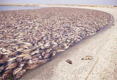 california-lago-morto