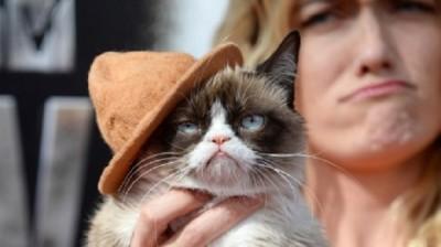 il-gatto-milionario